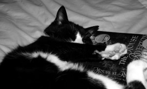 black and white cat cuddling with novel