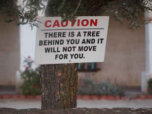 "tree trunk bearing sign saying ""there is a tree behind you and it will not move for you"""